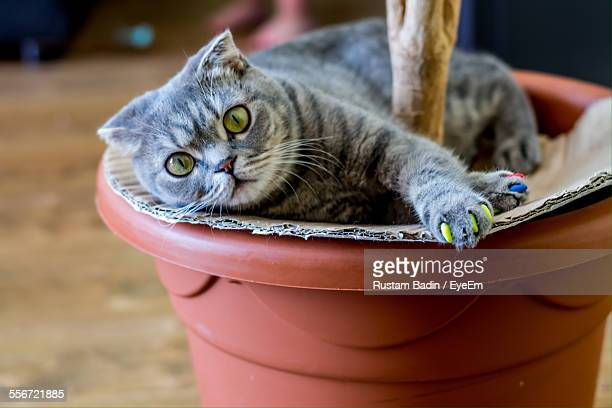 Portrait Of Cat Relaxing On Potted Plant