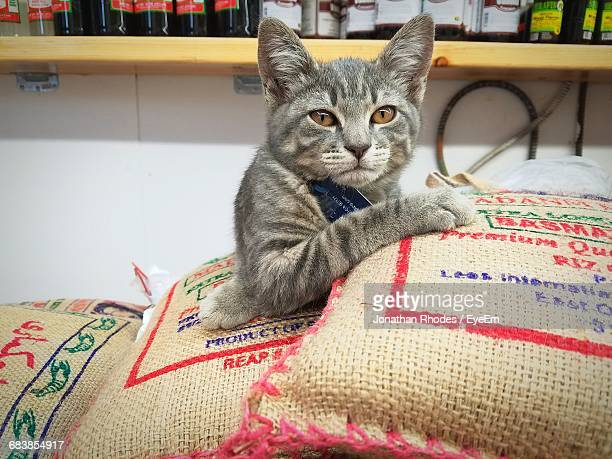 Portrait Of Cat Relaxing On Sack In Store