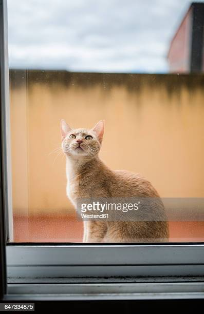 Portrait of cat sitting behind window pane looking up