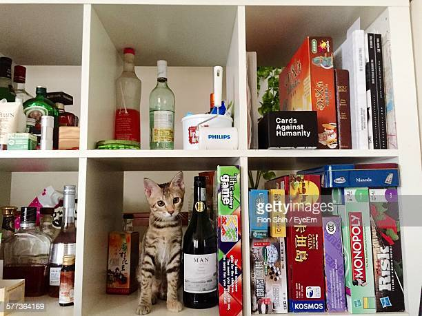 Portrait Of Cat Sitting In Shelf At Home