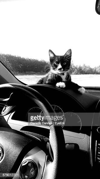 Portrait Of Cat Sitting On Car Windshield