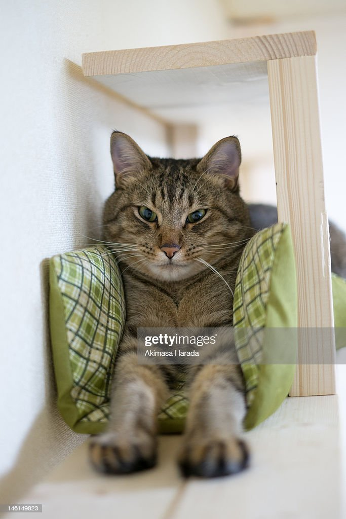 Portrait of cat trying to fit : Stock Photo