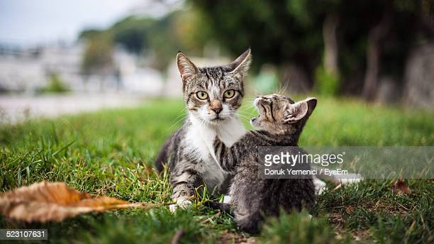 Portrait Of Cat With Kitten In Park