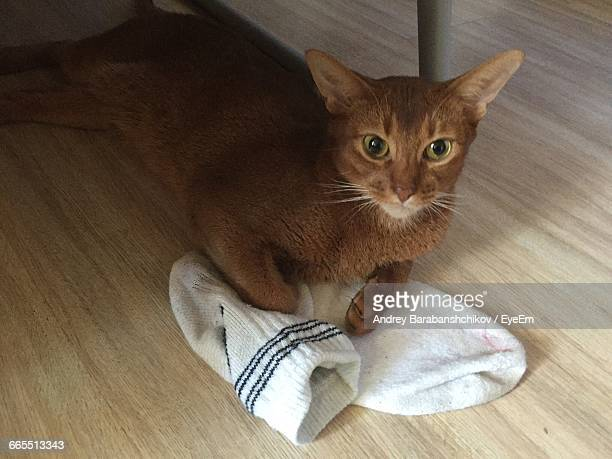 Portrait Of Cat With Socks Under Table
