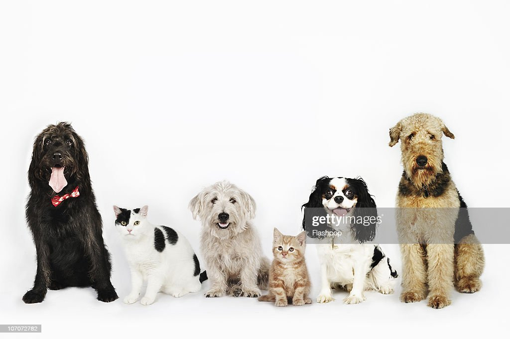 Portrait of cats and dogs sitting together : Stock Photo