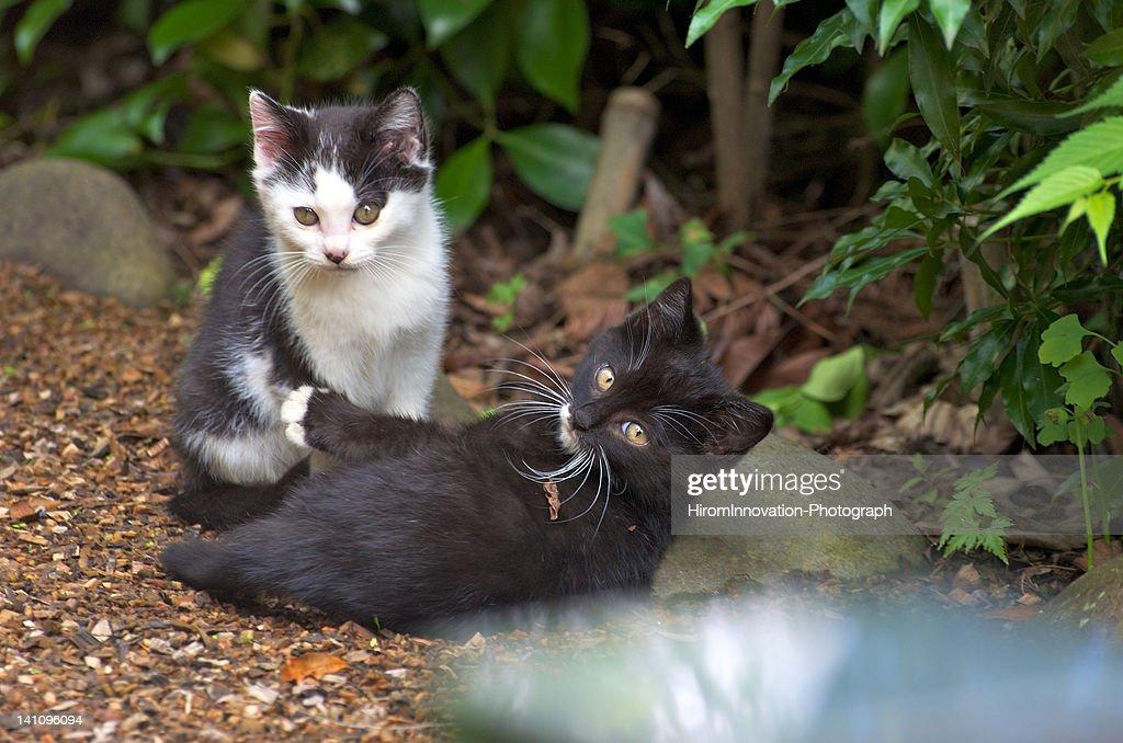 Portrait of cats : Stock Photo