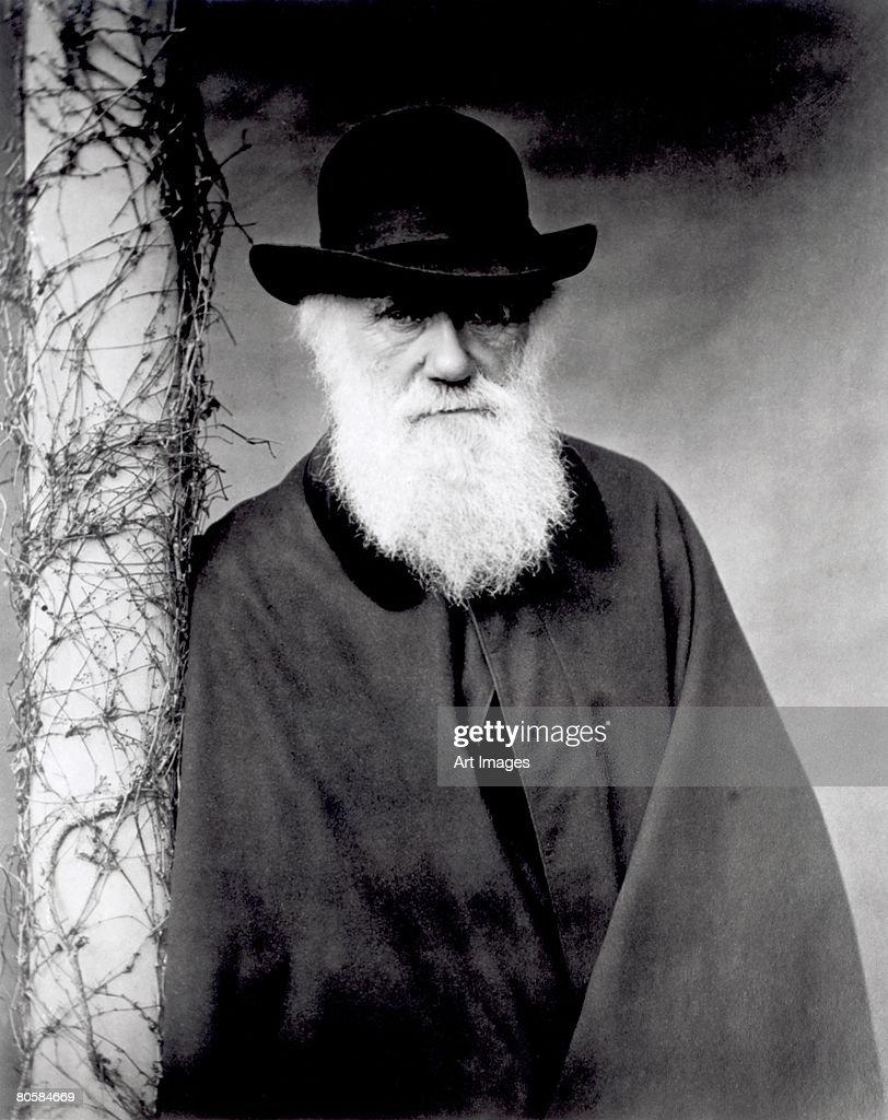 Portrait of Charles Darwin (1809-82) 1881 (b/w photo)