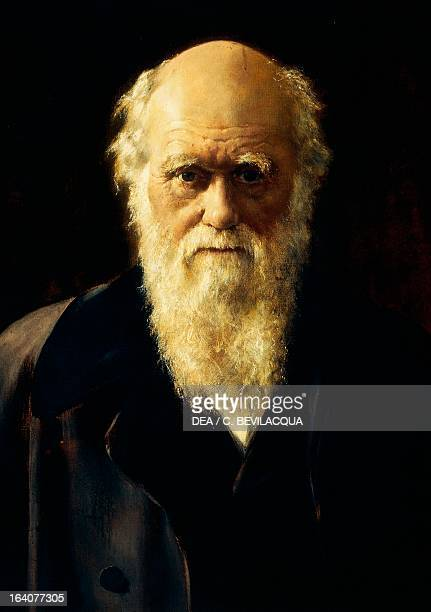 Portrait of Charles Robert Darwin British naturalist who laid the foundation of the theory of evolution by means of natural selection Painting by...