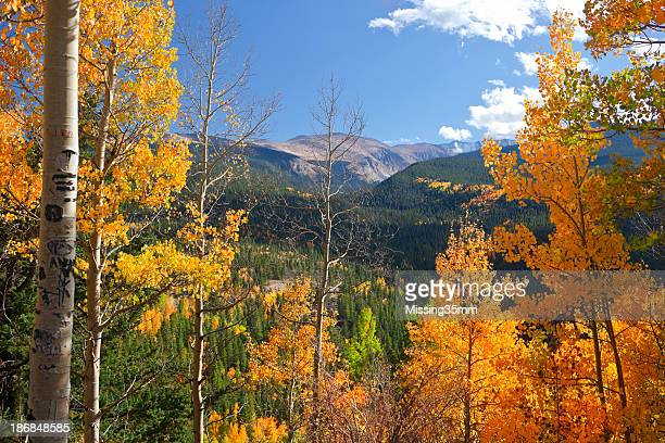 Portrait of Colorado landscape in fall with colored leaves