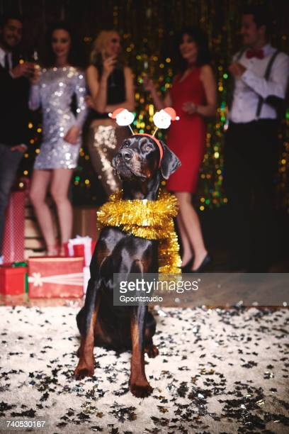 Portrait of dog at party wearing santa deely boppers, group of people dancing in background