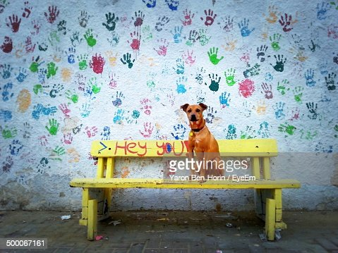 Portrait of dog on bench with multi colored handprints on wall