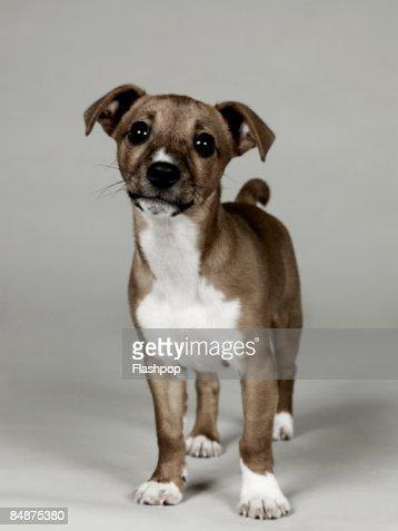 Portrait of dog  : Stock Photo