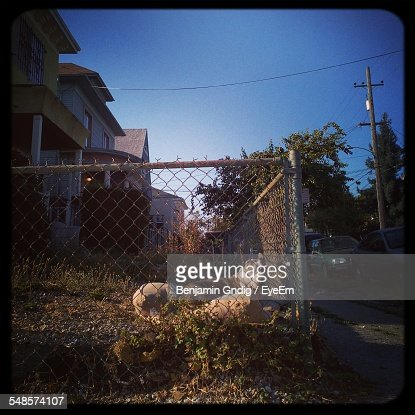 Portrait Of Dog Seen Through Chainlink Fence At Courtyard Against Clear Sky