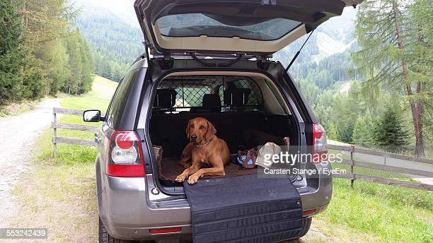 Portrait Of Dog Sitting In Car With Open Trunk