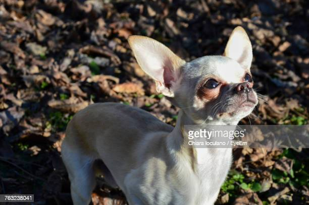 Portrait Of Dog Standing Outdoors