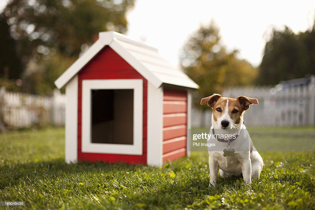 Portrait of dog with dog house