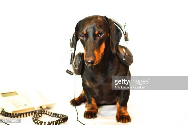 Portrait Of Dog With Headphones Against White Background