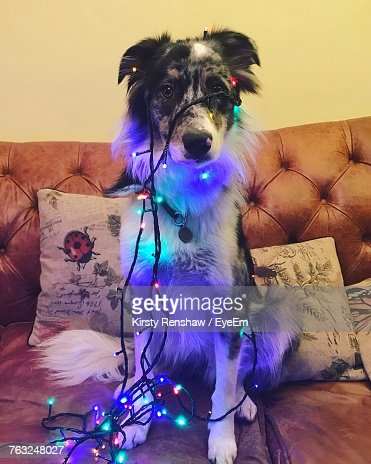 keywords - Dog Christmas Lights