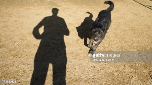Portrait Of Dog With Man Shadow At Beach
