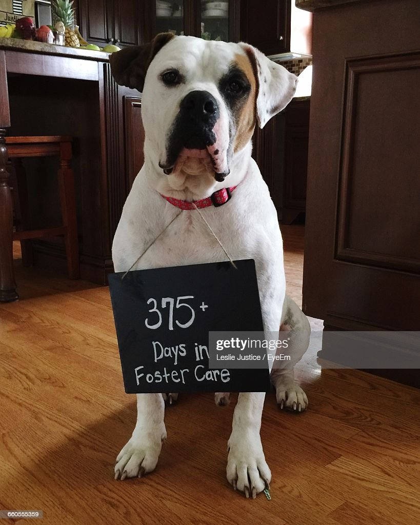 Portrait Of Dog With Message On Placard