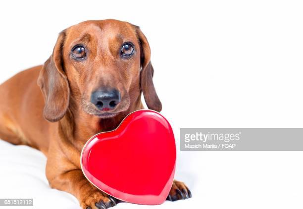Portrait of dog with red heart