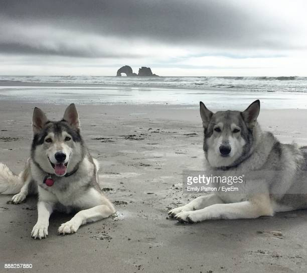 Portrait Of Dogs At Beach By Sea Against Sky