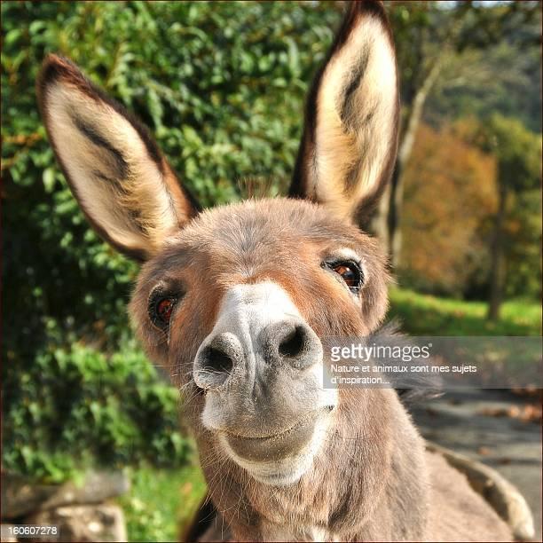 Portrait of donkey