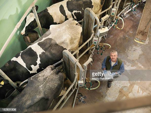 Portrait of farmer in rotary milking parlour on dairy farm with cows, high angle