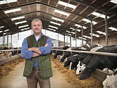 Portrait of farmer with arms folded in barn with cows on dairy farm