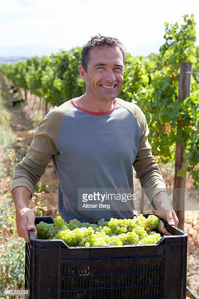 Portrait of farmer with grape harvest