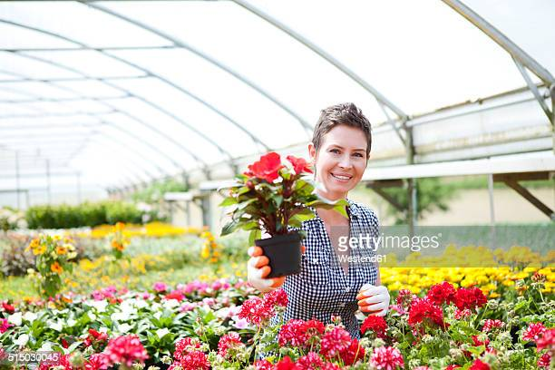 Portrait of female gardener offering potted plants in greenhouse