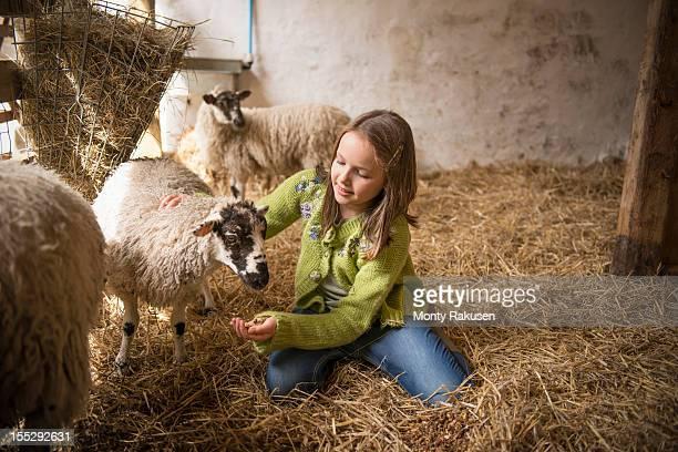 Portrait of girl feeding sheep on farm