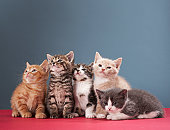 Portrait of group of kittens