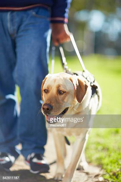 Portrait of guide dog