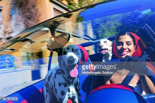 Portrait of Hispanic Woman in Her Car With Two Dalmatians : Stock Photo