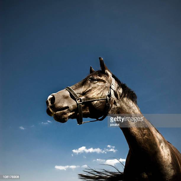Portrait of Horse Against Blue Sky