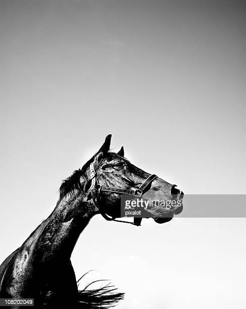 Portrait of Horse, Black and White