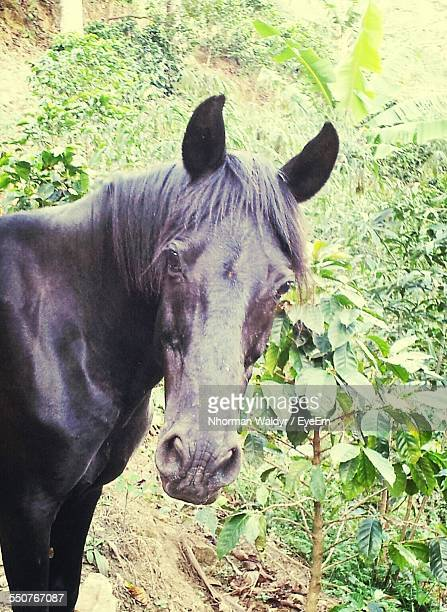 Portrait Of Horse In Forest