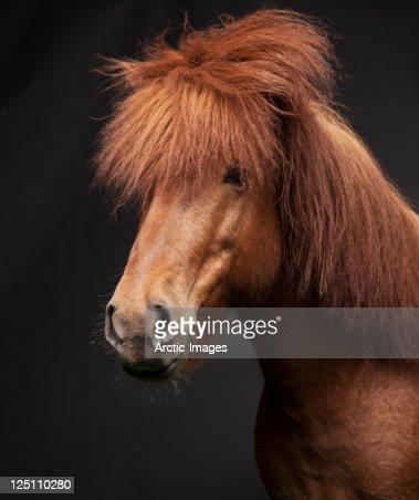 Portrait of Horse : Stock Photo