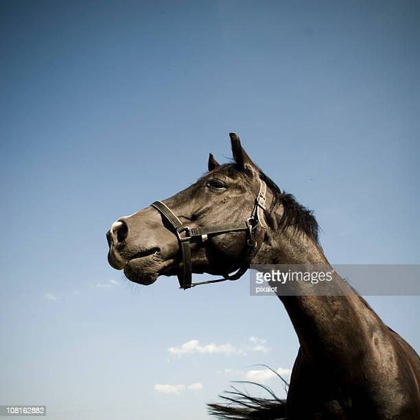 Portrait of Horse with Blue Sky