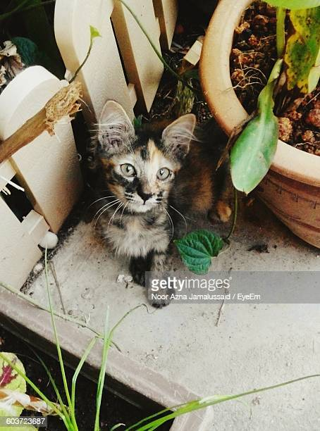 Portrait Of Kitten By Potted Plant