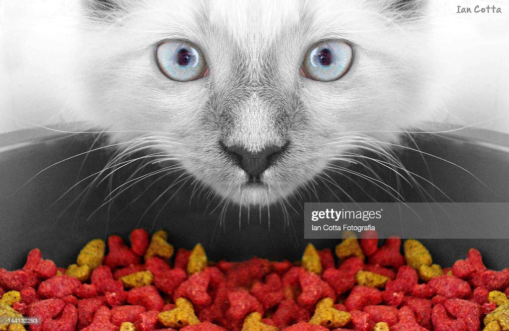 Portrait of kitten : Stock Photo
