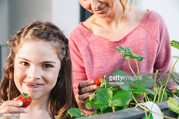 Portrait of little girl picking strawberries from balcony