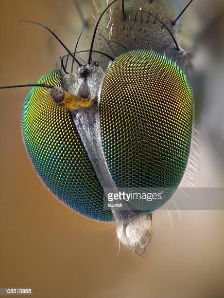 Porträt von Long legged fly (Dolichopodidae