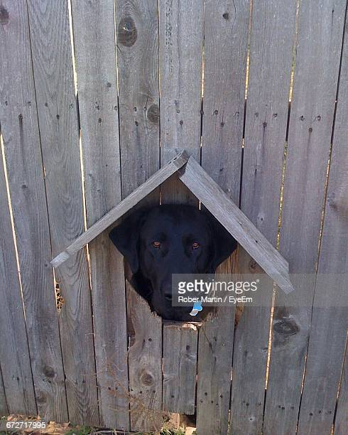 Portrait Of Looking Through Hole In Wooden Fence