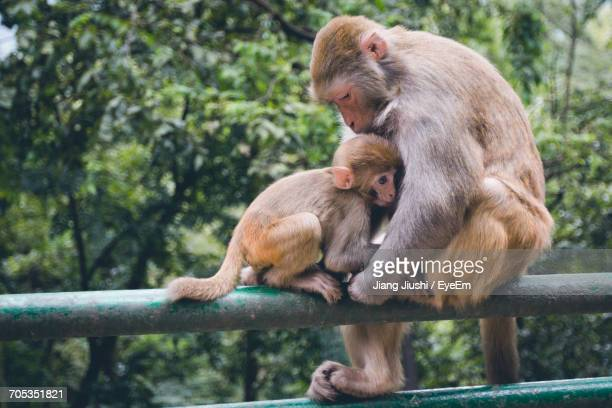 Portrait Of Mother And Baby Monkey