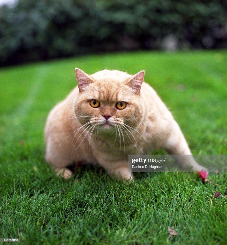 Portrait of orange cat : Stock Photo