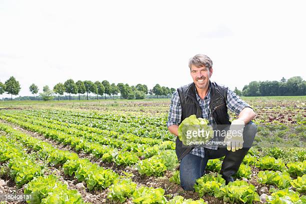 Portrait of organic farmer harvesting lettuce