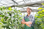 Portrait of organic farmer next to cucumber plants in polytunnel