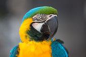 Portrait of parrot. Photo